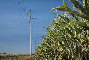 power lines and cornfield