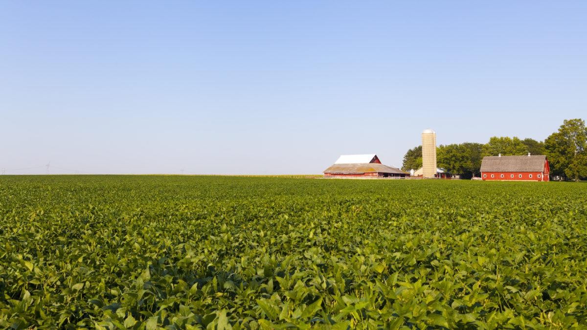 Looking across a field towards a farm