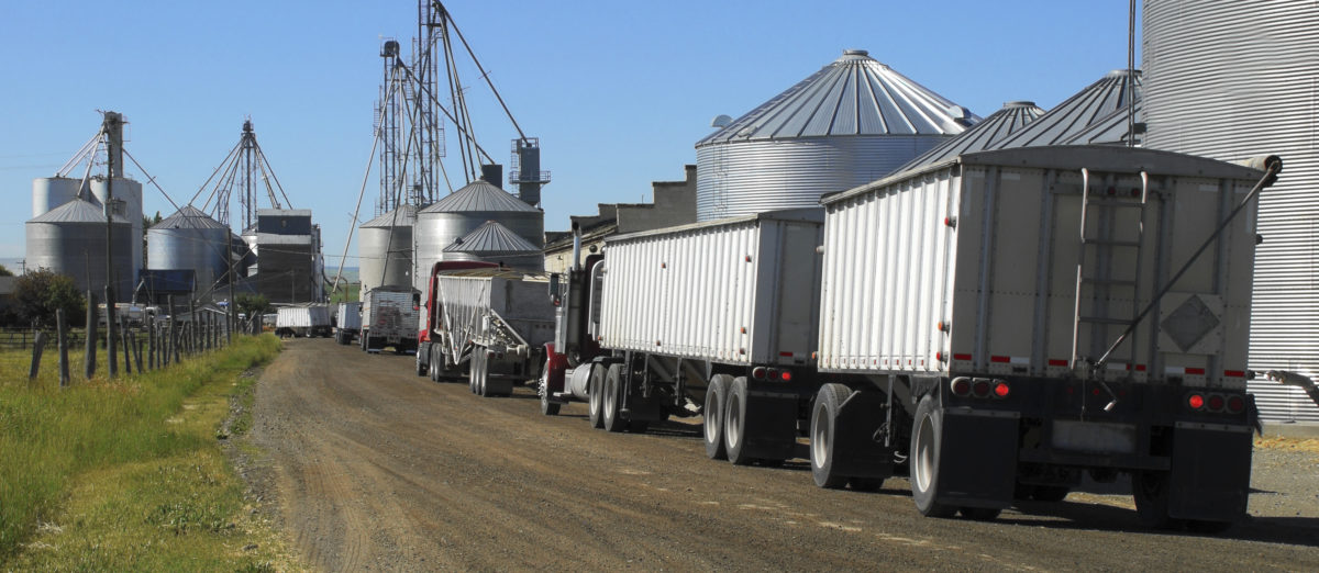 Trucks lined up at grain storage